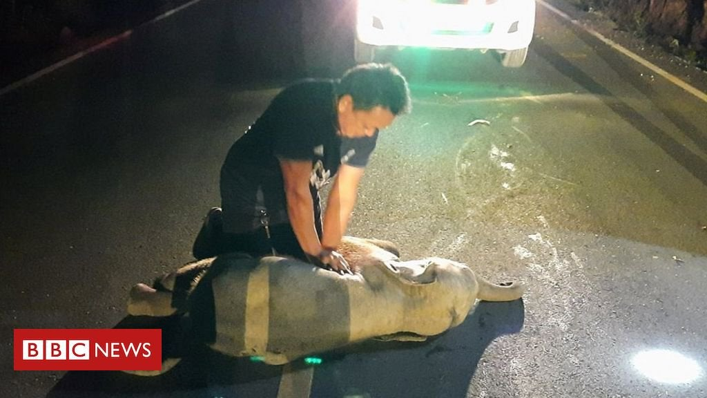 Thai man revives baby elephant with CPR after motorbike accident : worldnews