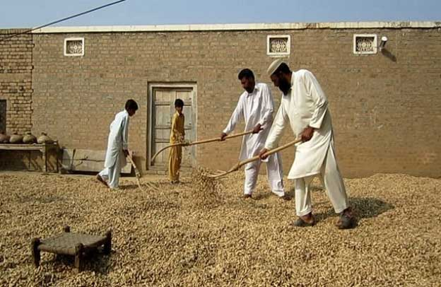 A Pakistani Farmer is Using Technology to Stop Agricultural Exploitation — Global Issues